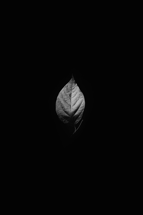 Leaves, Plant, Nature, Veins, Black And White