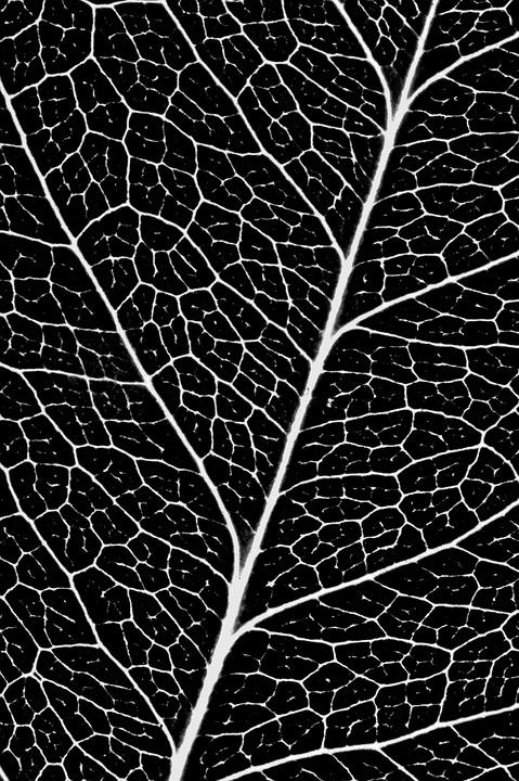 Sheet, Veins, Pattern, Flora