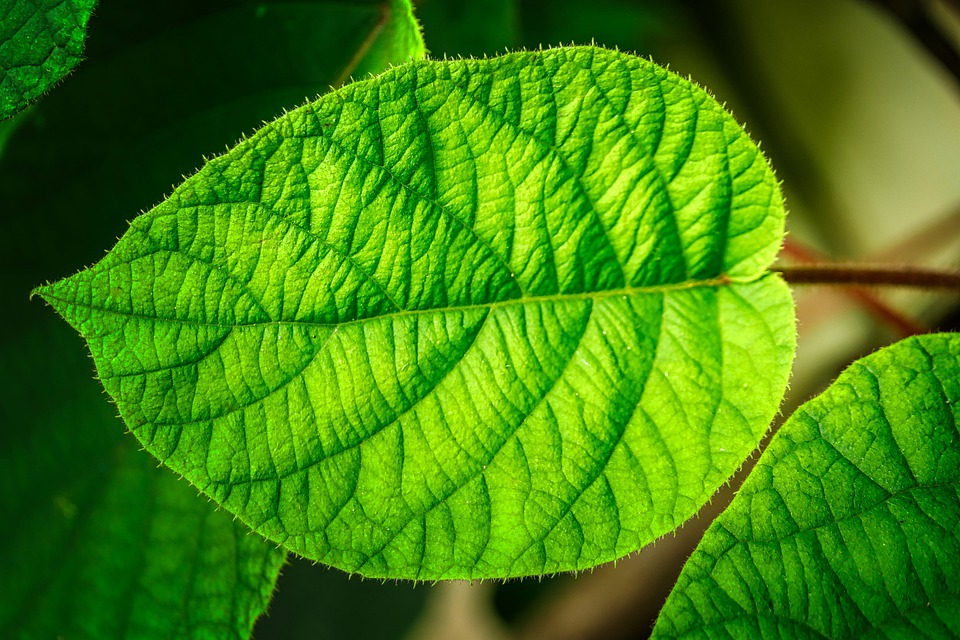 Leaf, Veins, Network, Nature, Pattern, Structure, Plant
