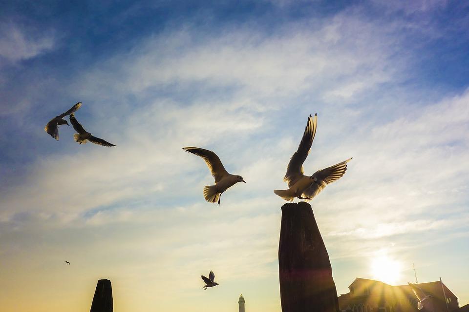 Gulls, Venice, Pile, Murano, Port, Sunset, Birds, Tribe