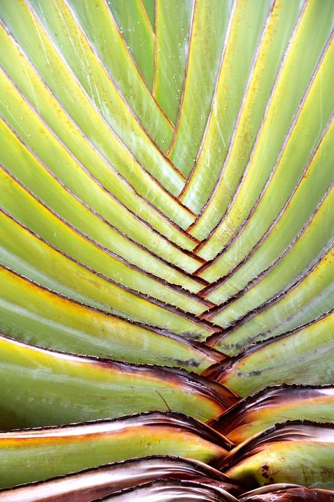 Aloe, Vera, Plant, Cactus, Agave, Tropics, Aloe Vera