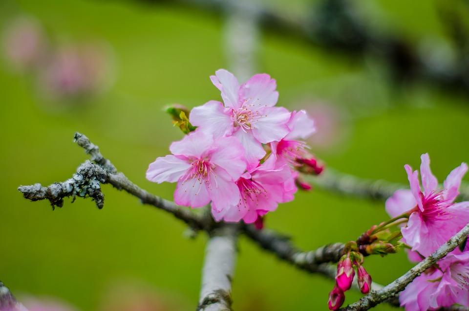 Flores, Rosa, Floral, Romantico, Rosado, Verde