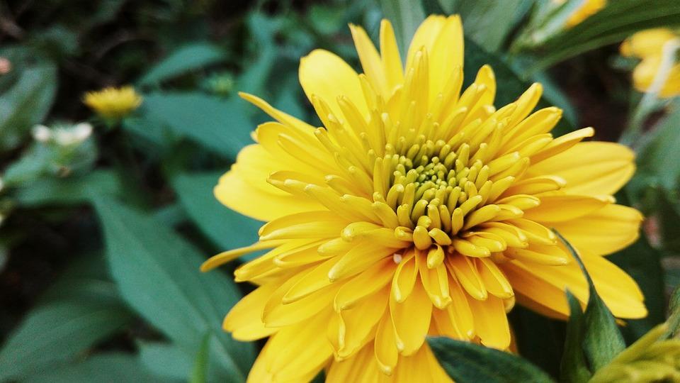 Nature, Flora, Flower, Garden, Bright, Vibrant