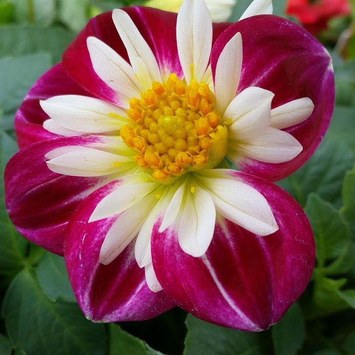 Flower, Pink, Floral, Vibrant, Nature, Bloom