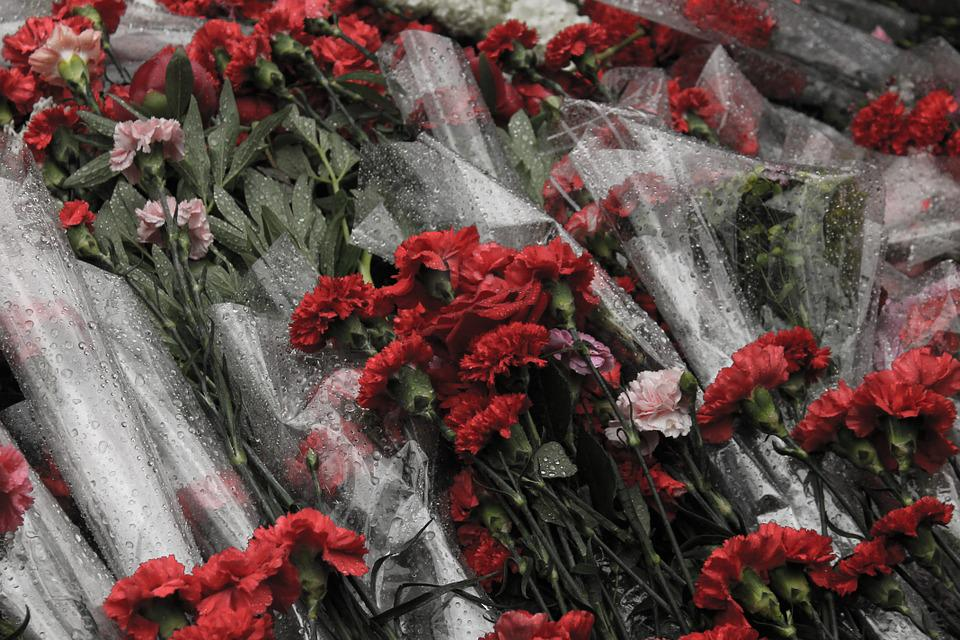 Victory Day, Carnation, Flowers, Red, Blood, Death