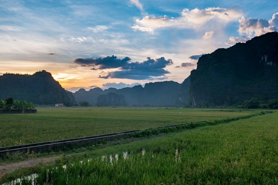 Southeast Asia, Vietnam, Rice Paddy, Rice, Green Fields