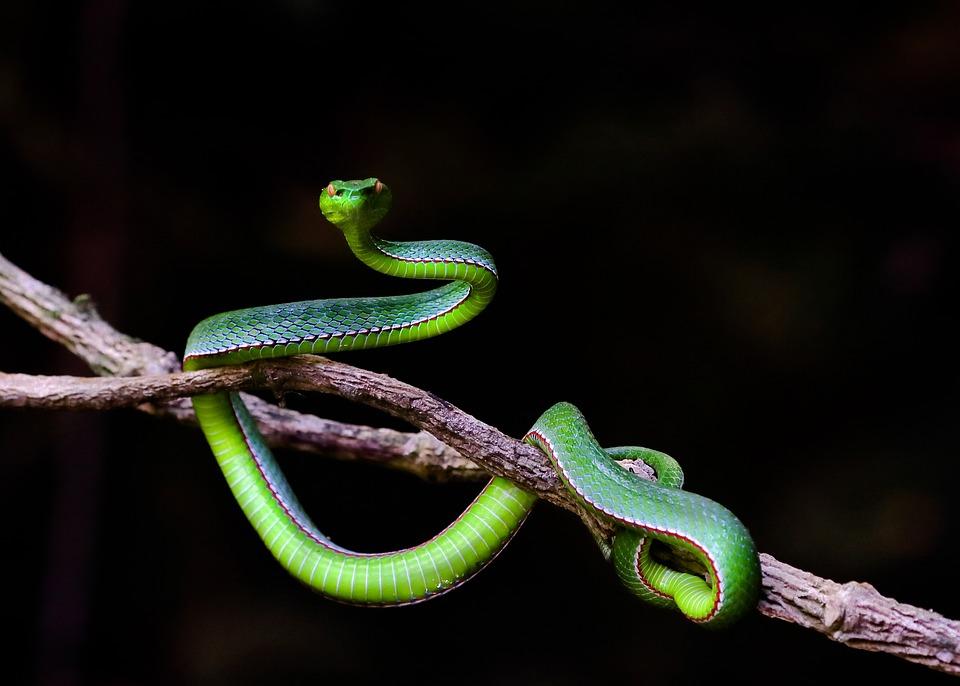 Wildlife, Snakes Record, Hue, Vietnam