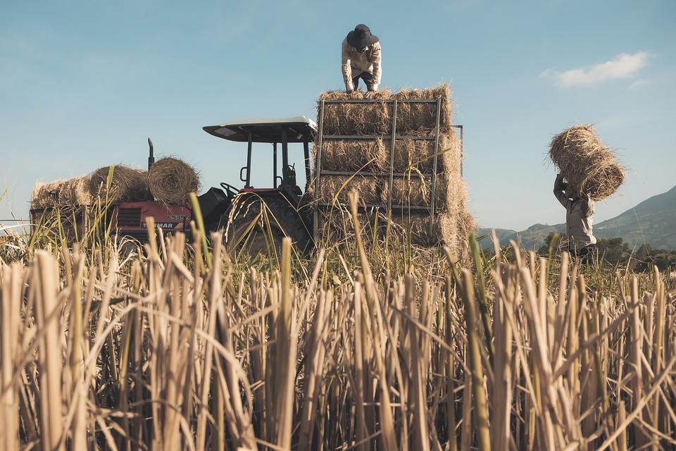 Vietnam, Farm, Rice, People, Life, Landscape