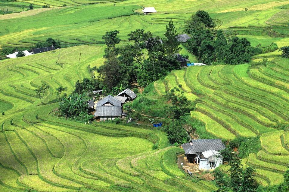Rice, Field, Vietnam Landscape, Rice Terraces, Vietnam