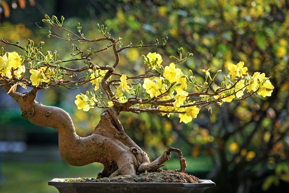 Leopard, The Lunar New Year, Vietnamese Tet, Vietnam