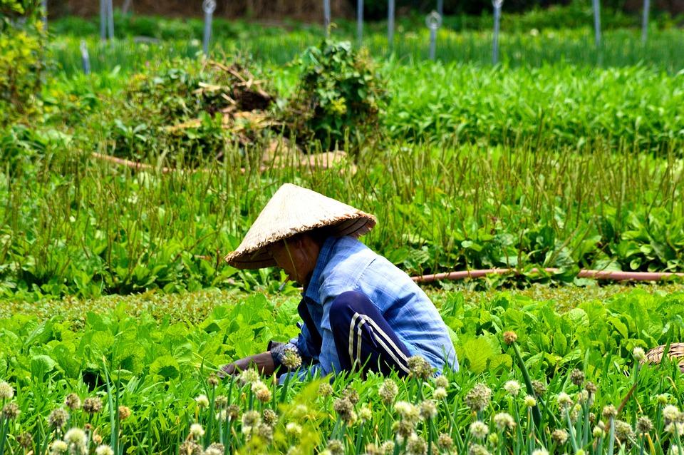 Vietnam, Traditional, Farming, Hat, Vietnamese, Tourism