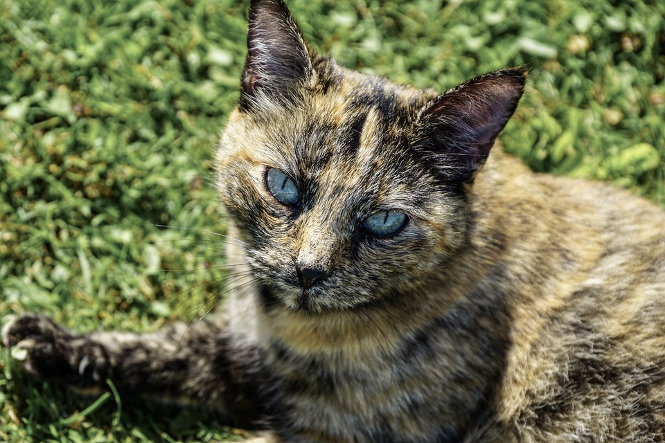 Cat, View, Eyes, Animal, Pet, Domestic Cat, Cat's Eyes