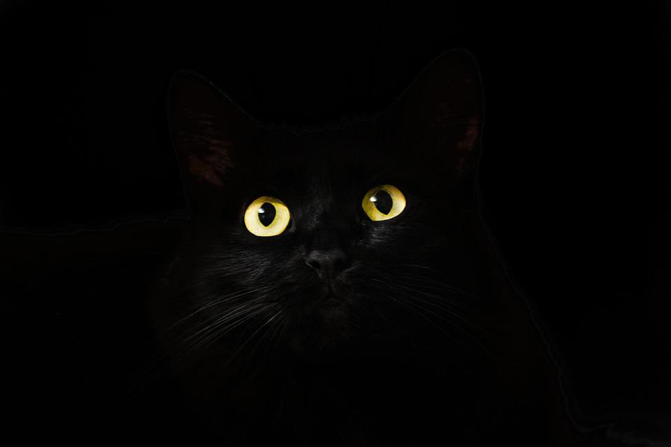 Cat Eyes, Cat, Black, View, Looking, Gaze, Staring