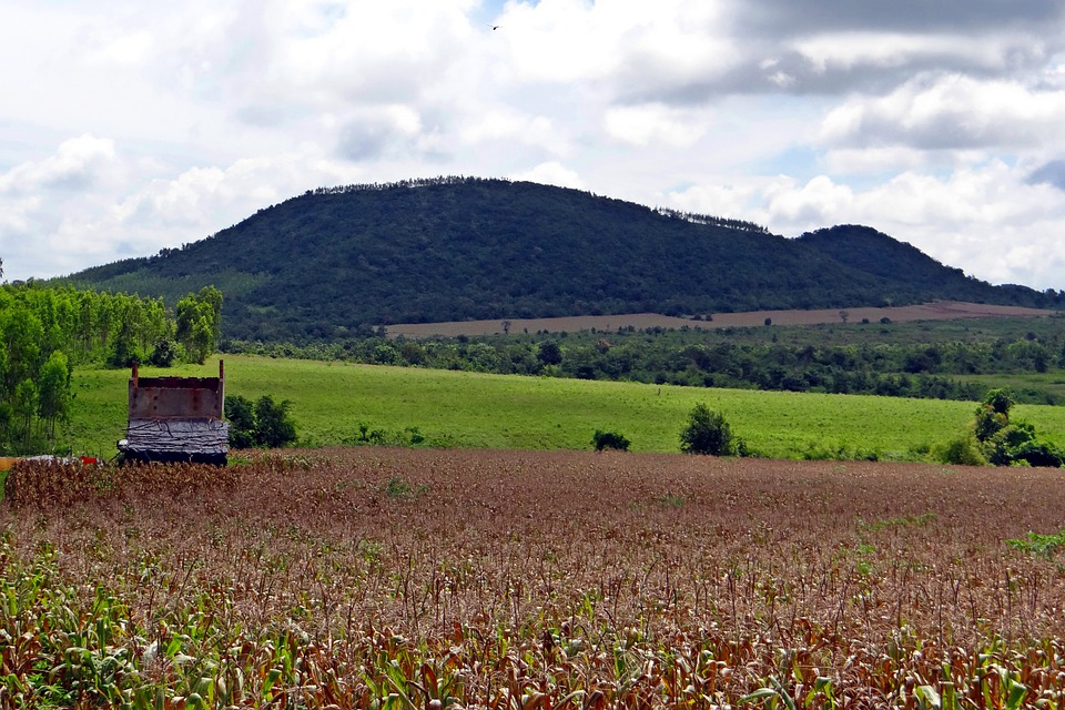 Maize, Cultivation, Corn, Harvest-ready, Hills, View