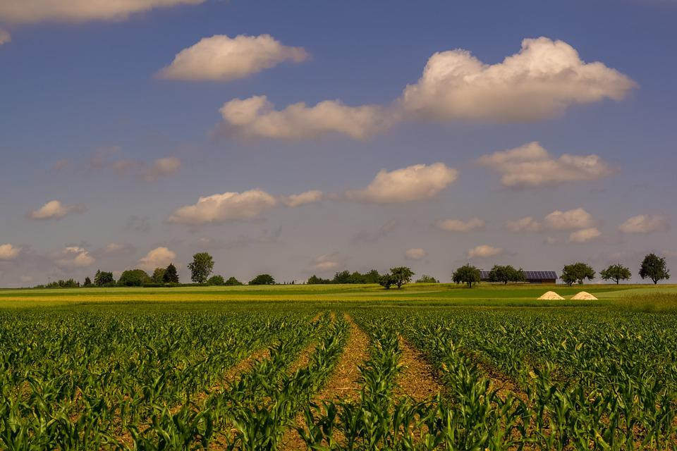 Field, Green, Nature, Sky, Clouds, View, Landscape