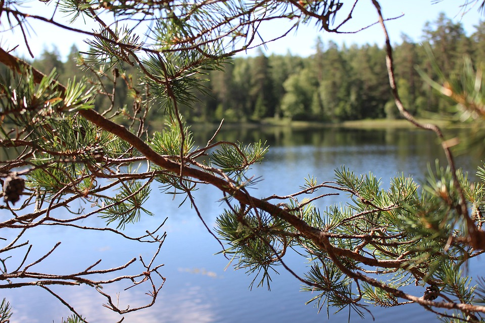 Lake, Sweden, Branch, Hidden, View, Forest
