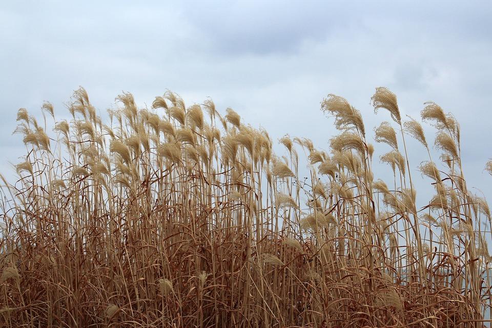 Sky, Grass, View, Figure