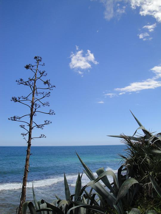 Agave, Mediterranean, Spain, Landscape, View, Nature