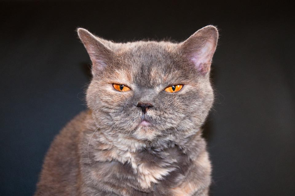 Cat, View, Sleepy, Funny, Animal, Pet, Eyes, Orange