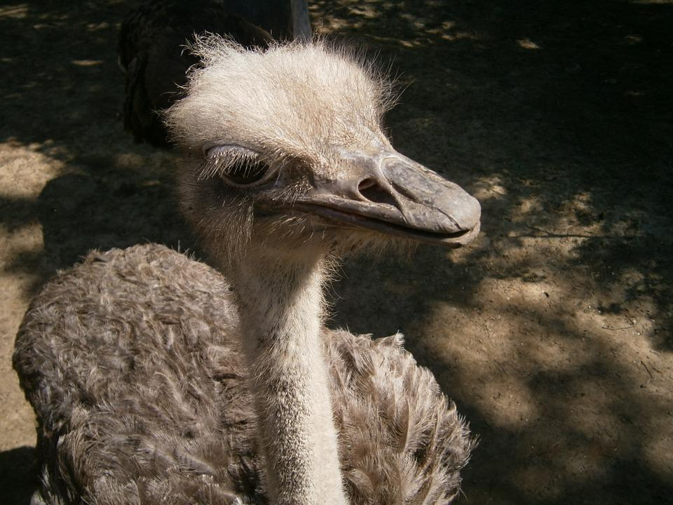 Bird, Beak, View, Feather, The Ostrich, Eye, Algae, Zoo