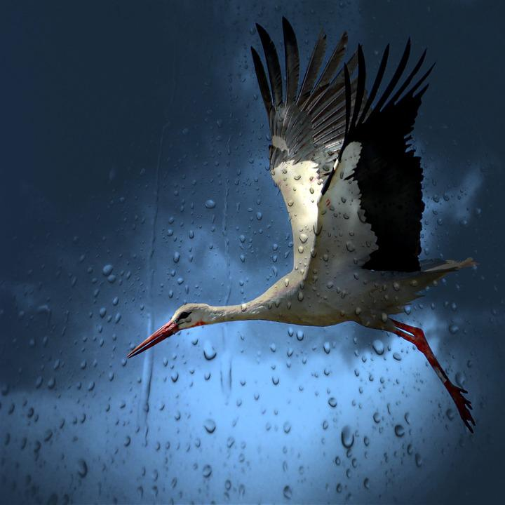 Stork, Bird, White, Village, White Stork, Field, Nature