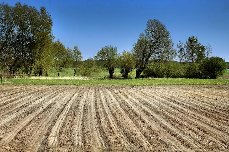 Field, The Cultivation Of, Village, Agriculture