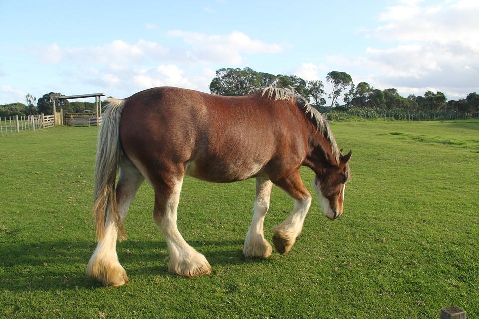 Horse, Field, Farm, Village