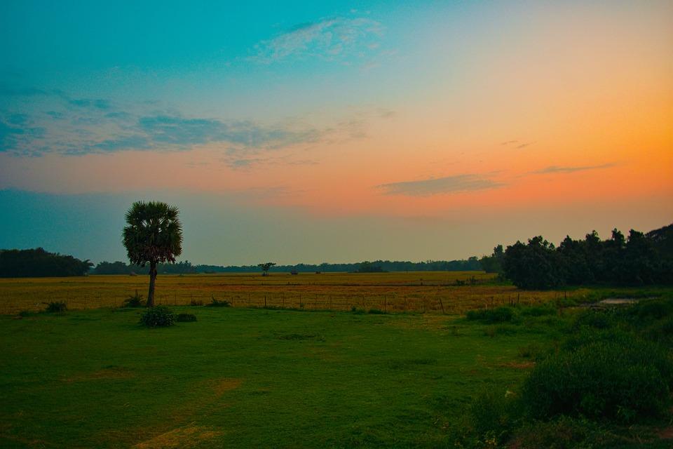 Nature, Village, Vintage, Summer Evening