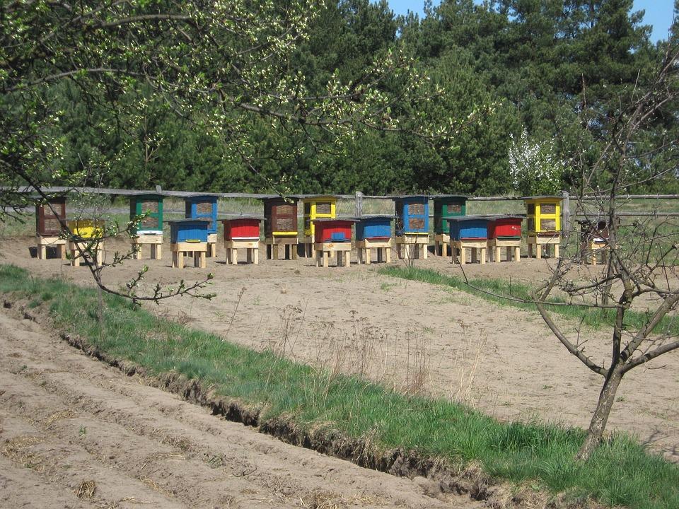 Ule, Honey, Village