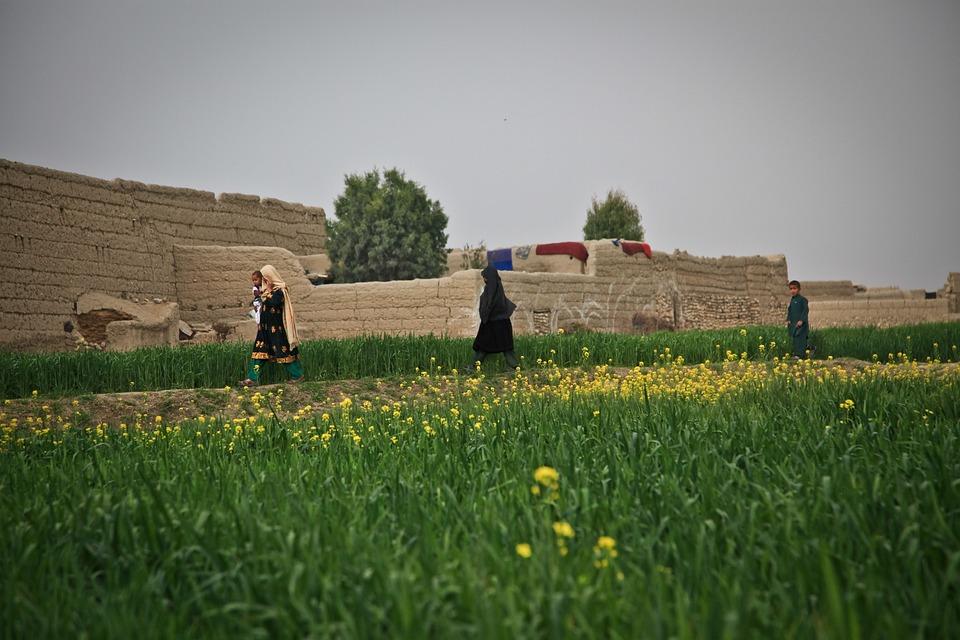 Afghanistan, Farm, Woman, Village, Nature, Farming