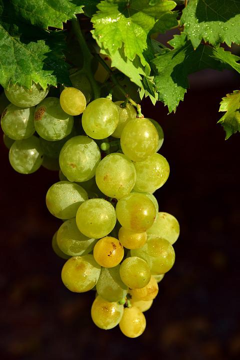 Grapes, Fruit, Sweet, Healthy, Vine, Delicious, Fresh