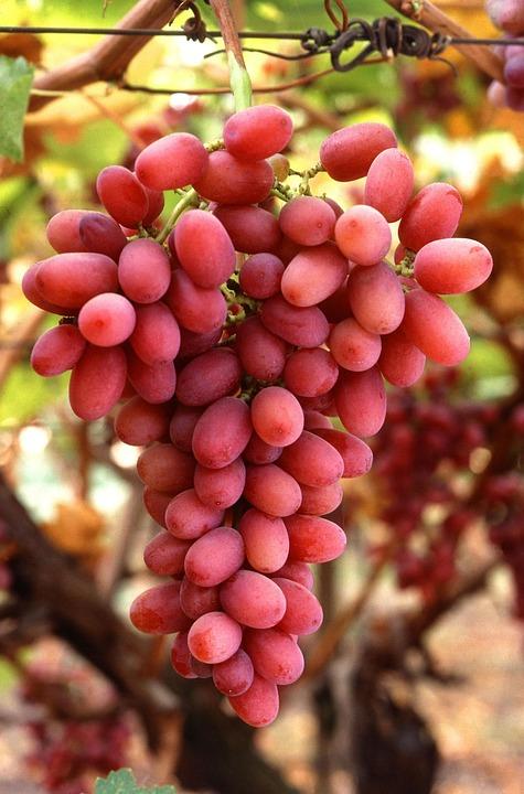 Vine, Seedless, Crimson, Fruit, Grapes, Fruits, Plants