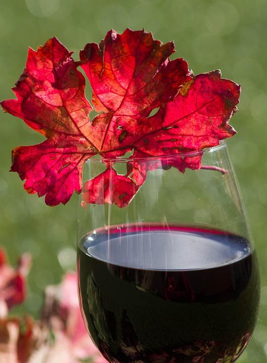 Glass Of Wine, Alcohol, Vine Leaf, Dead Leaf