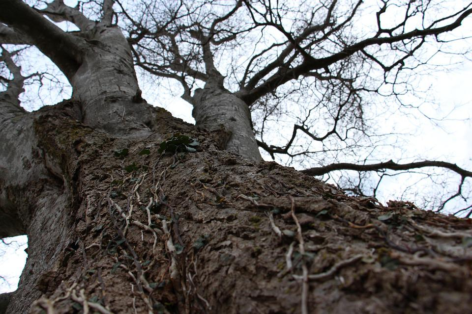 Tree, Vines, Nature, Trunk, Branches, Texture