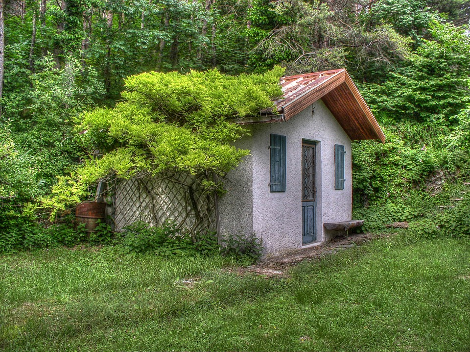 Small House, Vines, Trees, Scene