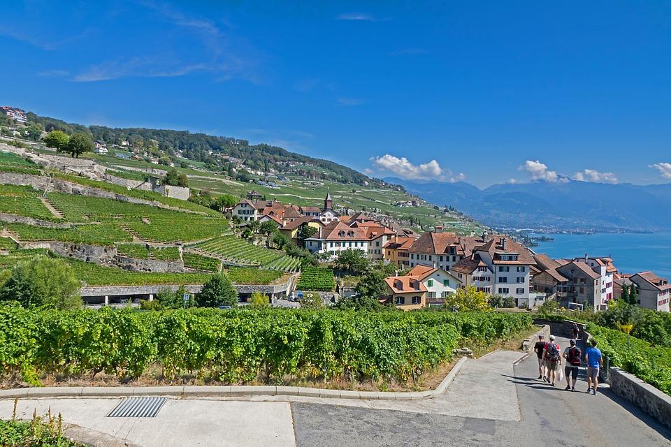 Vines, Vineyard, Wine, Wine Red, Grapevine, Lake Geneva