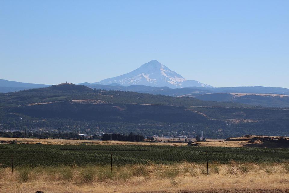Columbia River, Oregon, Vineyard