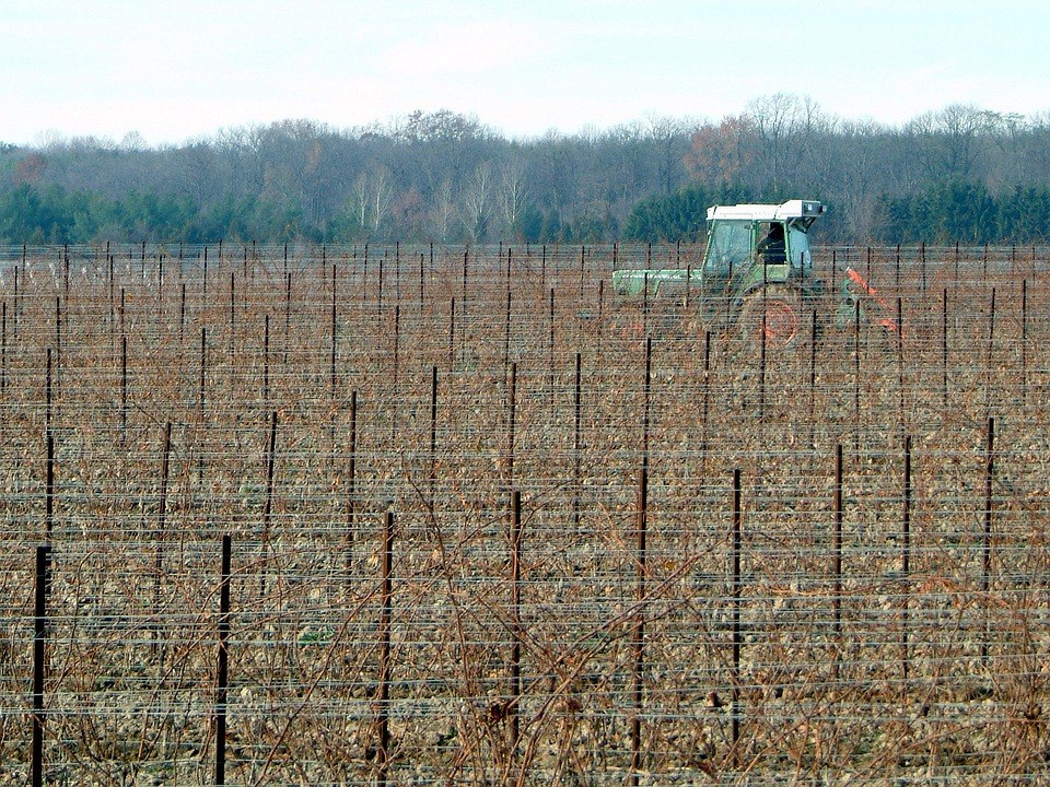 Vineyard, Agriculture, Farming, Grapes, Crops, Tractor