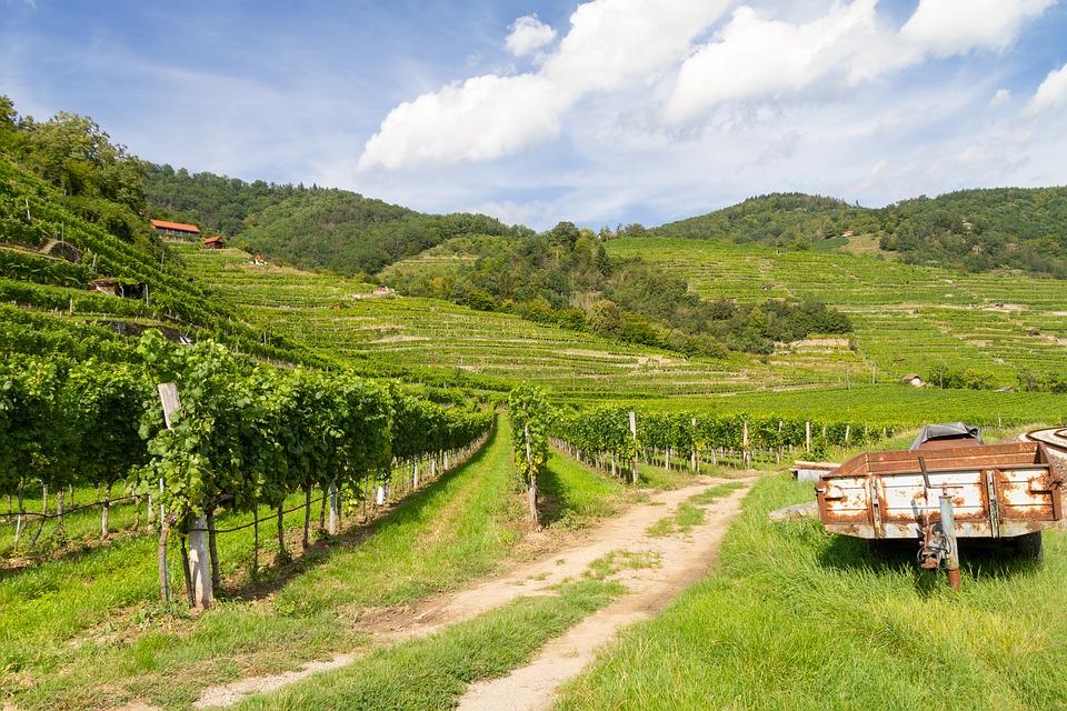 Landscape, Vineyard, Valley, Vines, Foliage, Plants