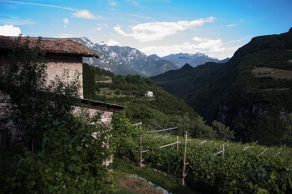 Vineyard, Winegrowing, Stone House, Mountains