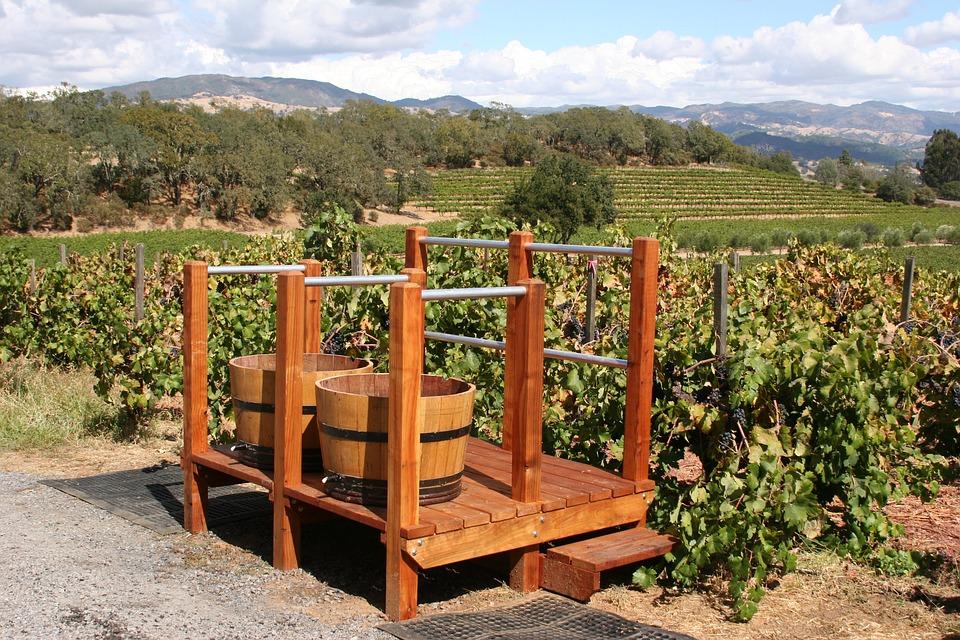Vineyard, Winery, Grape, Nature, Scenic