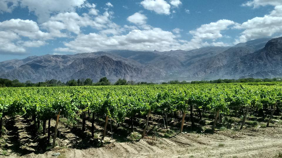 Cafayates, Argentina, Vineyards, Landscape, Vineyard