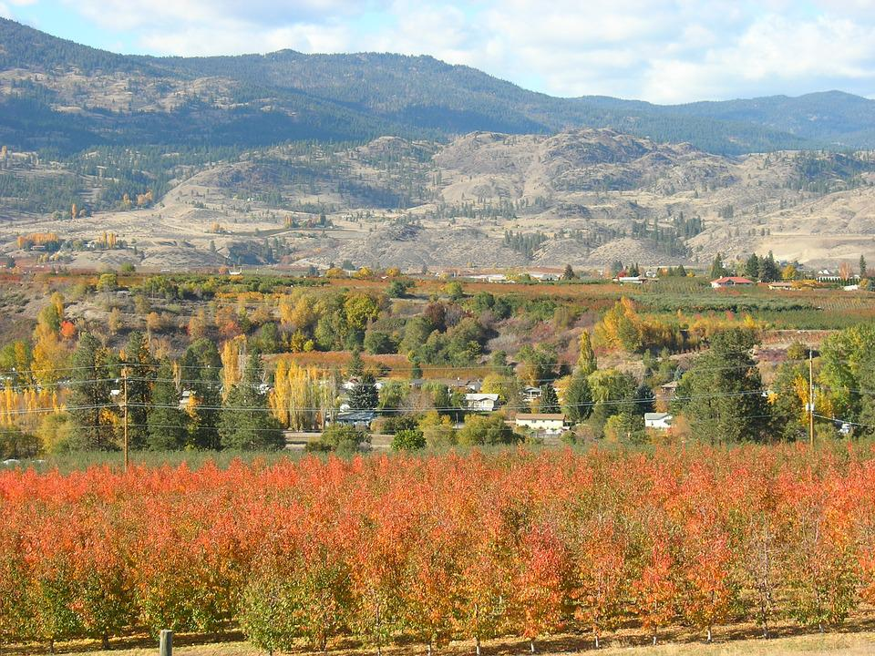 Okanagan, Vineyards, Canada