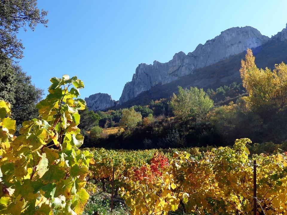 Nature, Vine, Vineyards, The Dentelles De Montmirail