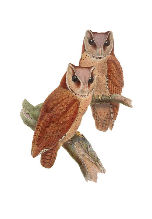 Bird, Owl, Animal, Vintage, Isolated, Png
