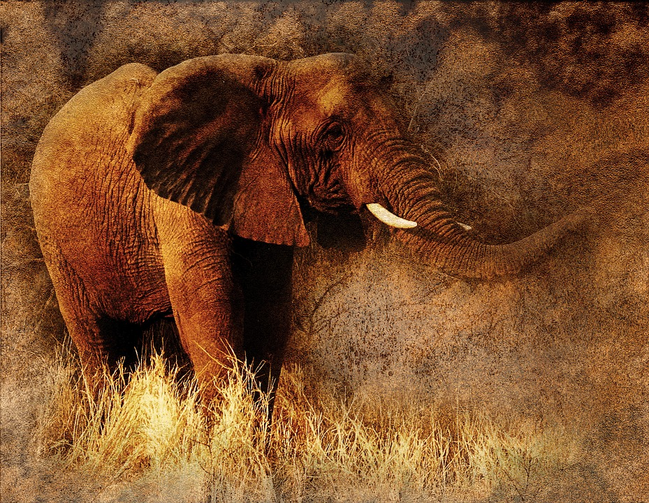 Elephant, Animal, Art, Abstract, Vintage, Nature