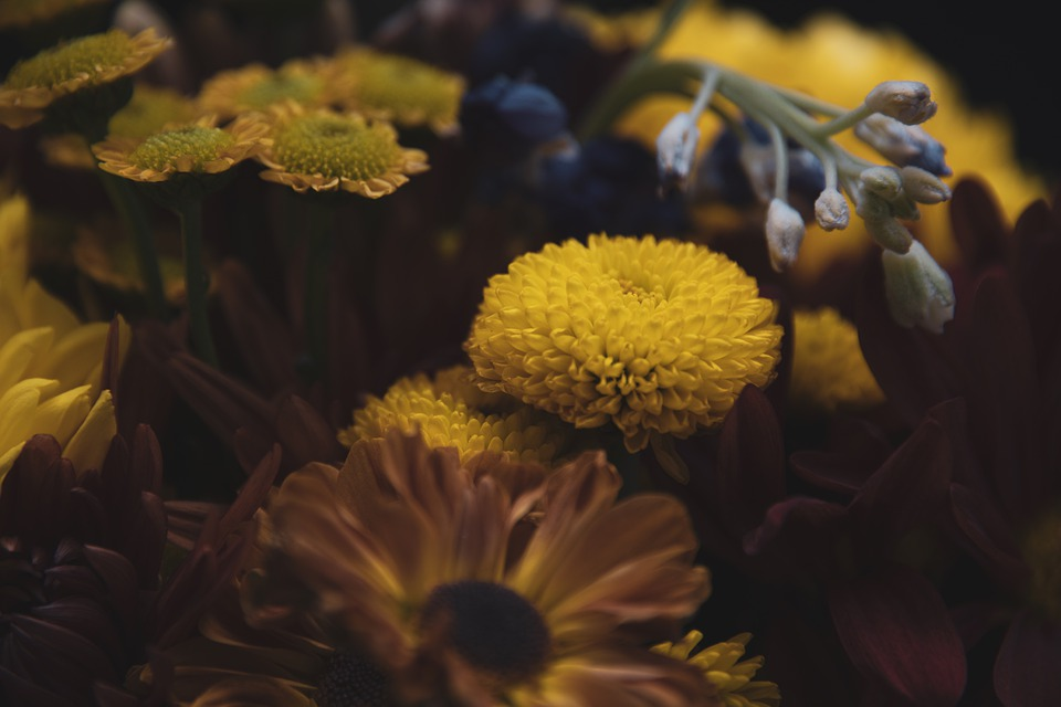 Flowers, Vintage, Dreamy, Background, Happy, Mysterious