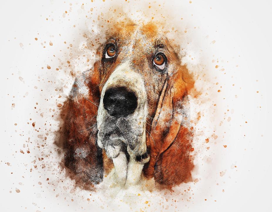 Free photo Vintage Dog Abstract Pet Basset Watercolor Art ...