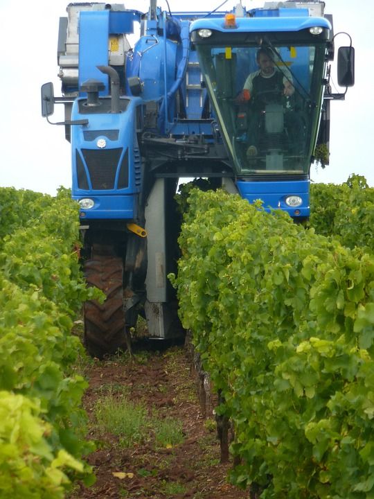 Vintage, Wine Harvest, Wine, Grapes, Harvester, Vines