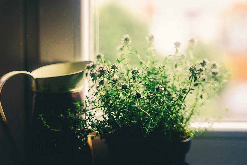 Flower, Window, House, Vase, Plant, Vintage, Deco